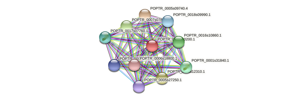 POPTR_0146s00200.1 protein (Populus trichocarpa) - STRING interaction network