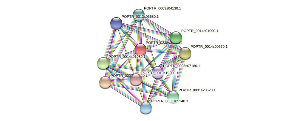 POPTR_0238s00200.1 protein (Populus trichocarpa) - STRING interaction network