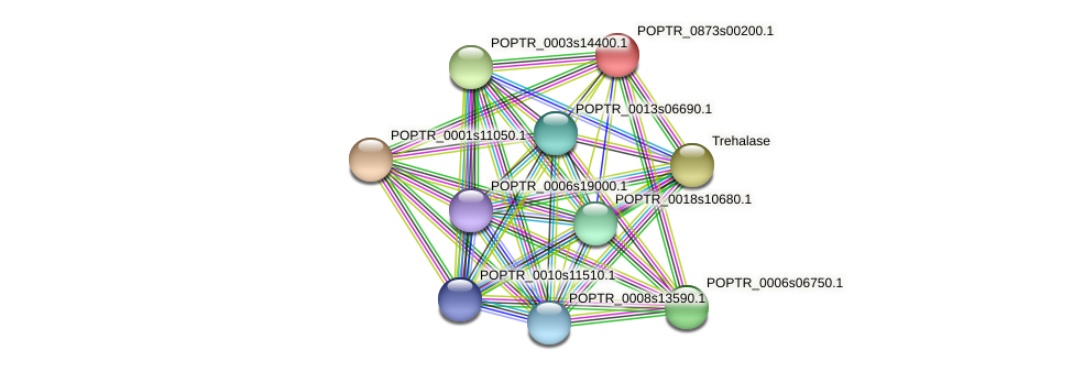 POPTR_0873s00200.1 protein (Populus trichocarpa) - STRING interaction network