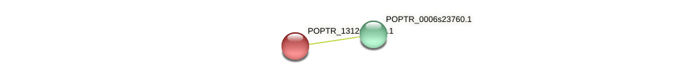 POPTR_1312s00200.1 protein (Populus trichocarpa) - STRING interaction network
