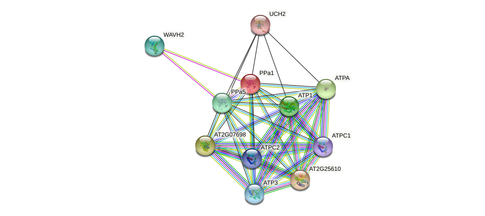 PPa1 protein (Arabidopsis thaliana) - STRING interaction network
