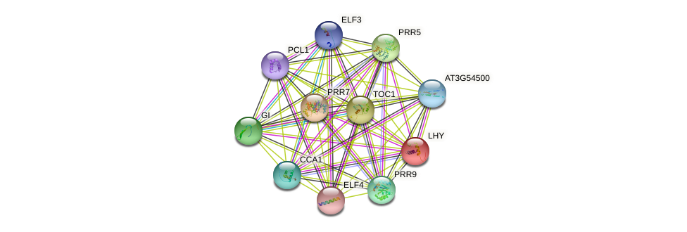 LHY protein (Arabidopsis thaliana) - STRING interaction network