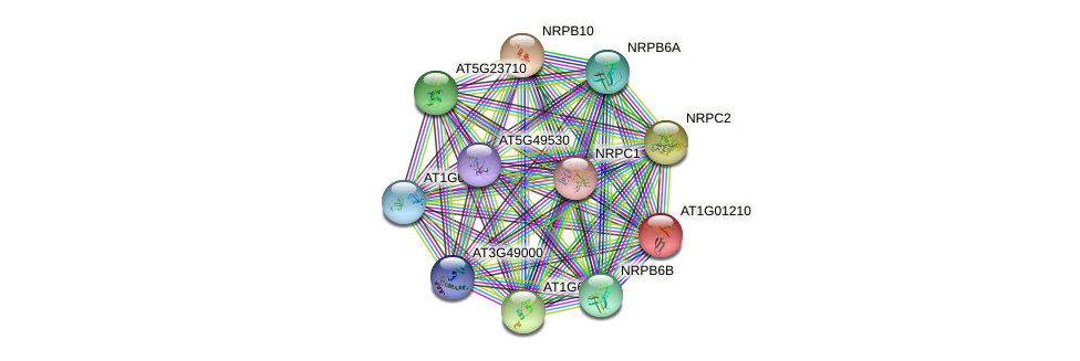 AT1G01210 protein (Arabidopsis thaliana) - STRING interaction network