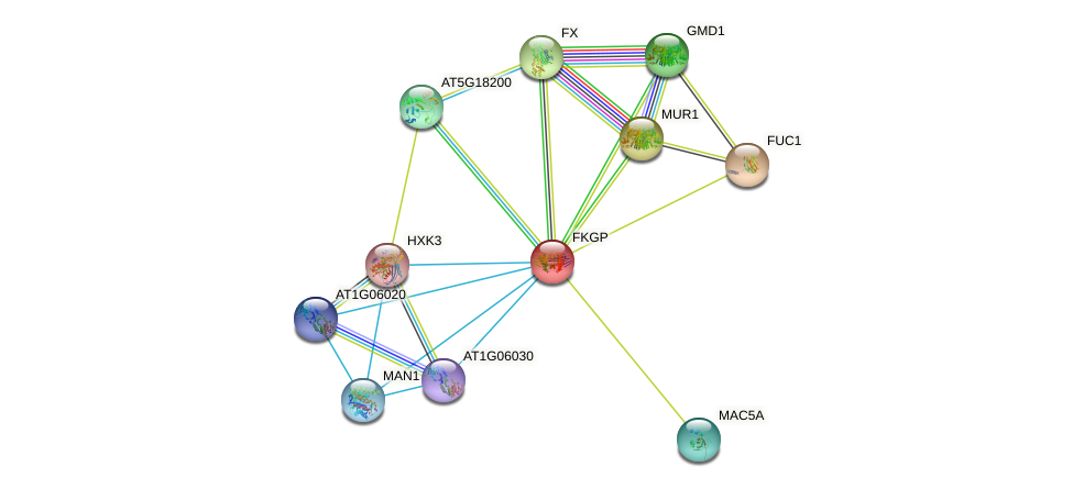 FKGP protein (Arabidopsis thaliana) - STRING interaction network