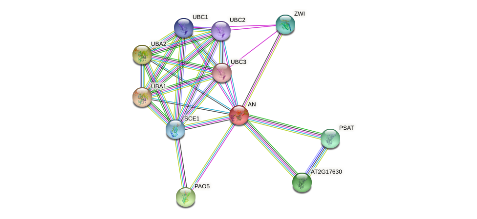 AN protein (Arabidopsis thaliana) - STRING interaction network