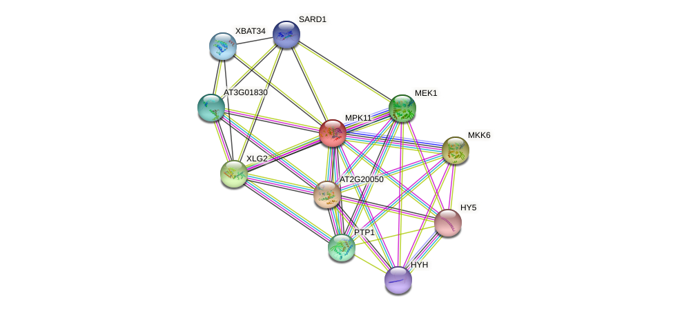 MPK11 protein (Arabidopsis thaliana) - STRING interaction network