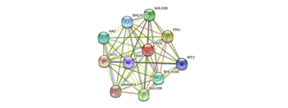 FRO2 protein (Arabidopsis thaliana) - STRING interaction network