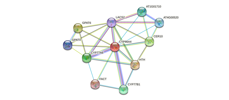 CYP86A4 protein (Arabidopsis thaliana) - STRING interaction network
