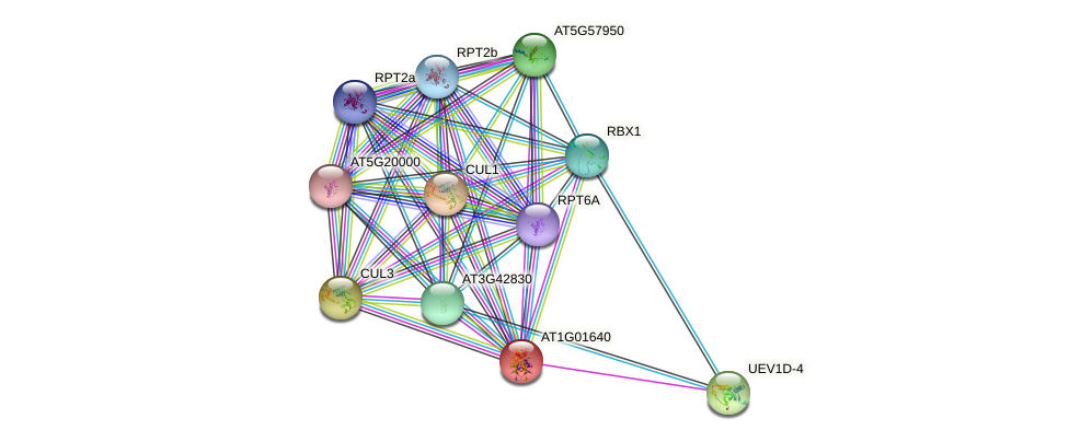AT1G01640 protein (Arabidopsis thaliana) - STRING interaction network