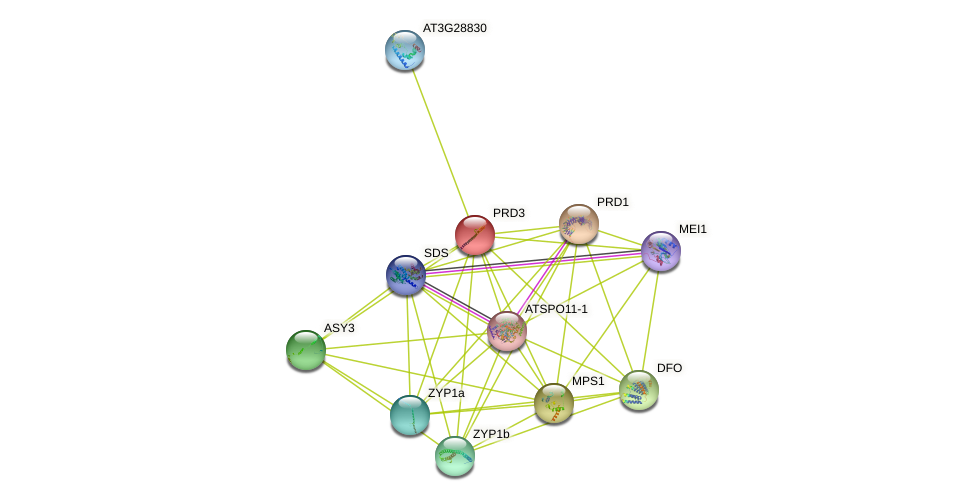 PRD3 protein (Arabidopsis thaliana) - STRING interaction network