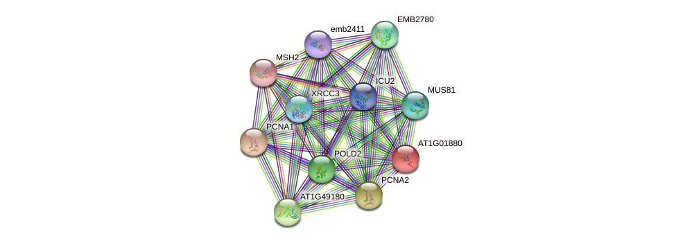 AT1G01880 protein (Arabidopsis thaliana) - STRING interaction network