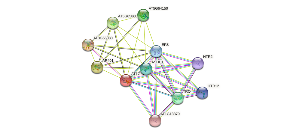AT1G01920 protein (Arabidopsis thaliana) - STRING interaction network
