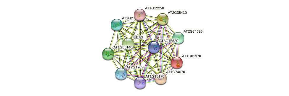 AT1G01970 protein (Arabidopsis thaliana) - STRING interaction network