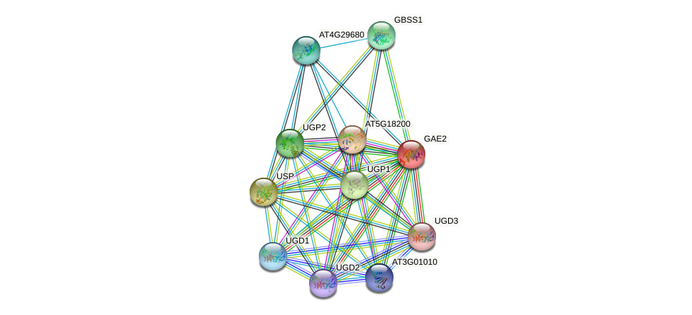 GAE2 protein (Arabidopsis thaliana) - STRING interaction network