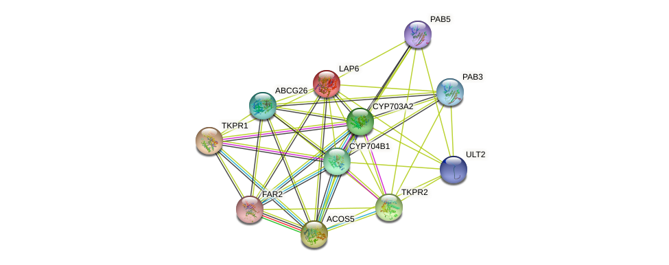 LAP6 protein (Arabidopsis thaliana) - STRING interaction network