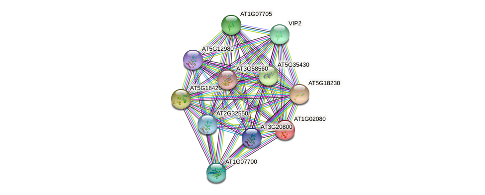 AT1G02080 protein (Arabidopsis thaliana) - STRING interaction network