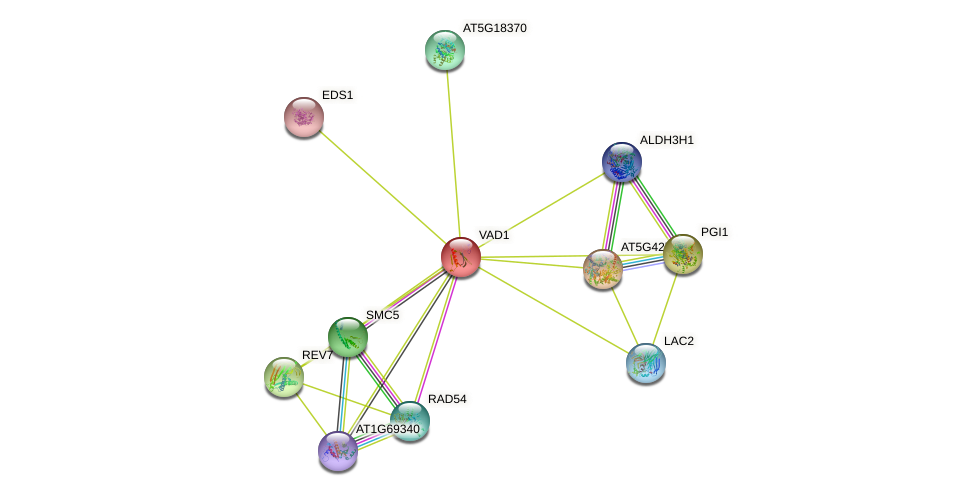 VAD1 protein (Arabidopsis thaliana) - STRING interaction network
