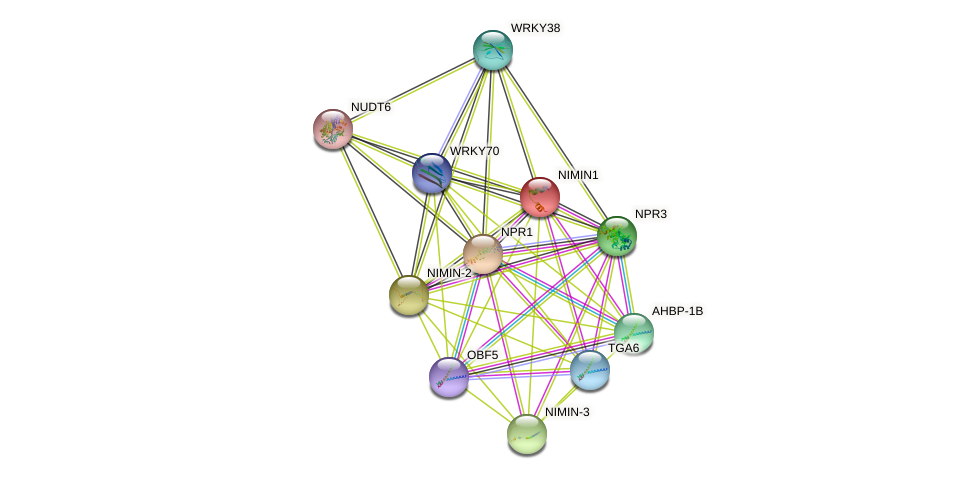 NIMIN1 protein (Arabidopsis thaliana) - STRING interaction network