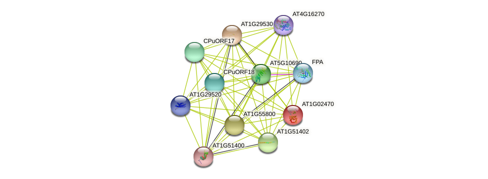 AT1G02470 protein (Arabidopsis thaliana) - STRING interaction network