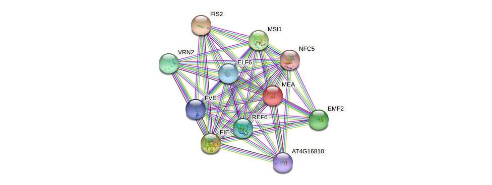 MEA protein (Arabidopsis thaliana) - STRING interaction network