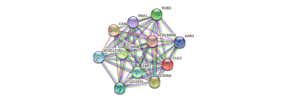 CUL2 protein (Arabidopsis thaliana) - STRING interaction network