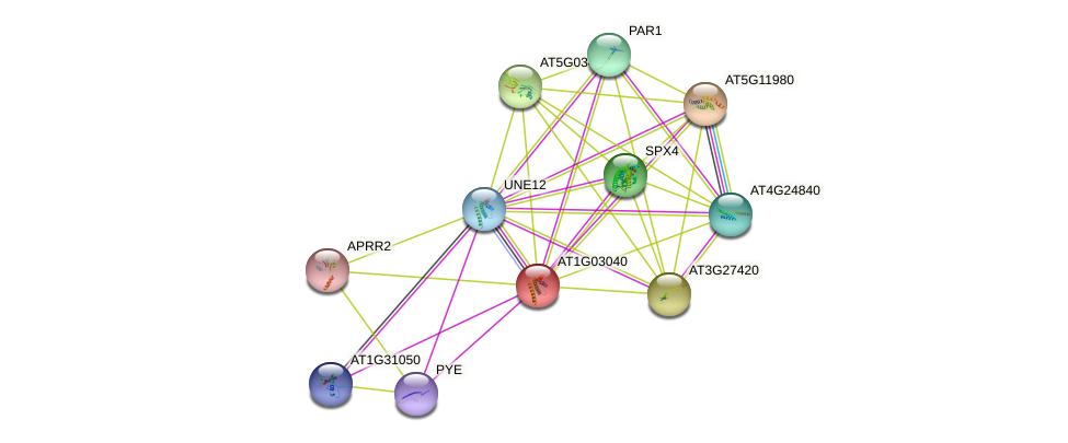 AT1G03040 protein (Arabidopsis thaliana) - STRING interaction network