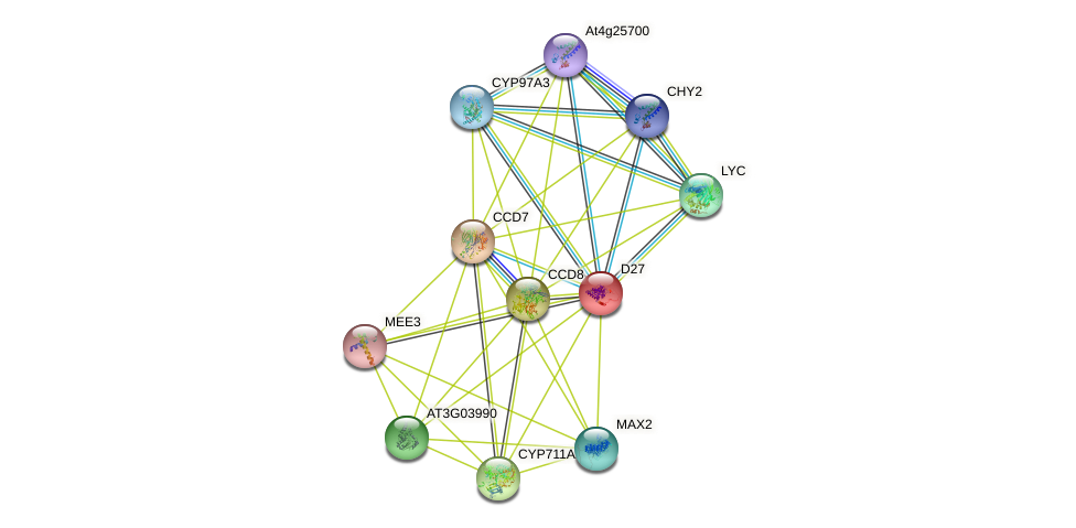 D27 protein (Arabidopsis thaliana) - STRING interaction network