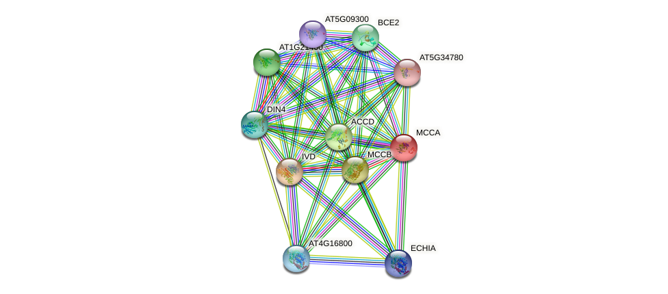 MCCA protein (Arabidopsis thaliana) - STRING interaction network