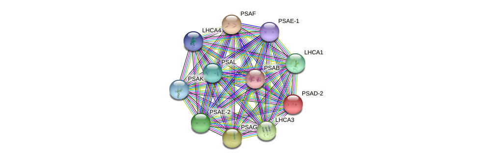 PSAD-2 protein (Arabidopsis thaliana) - STRING interaction network