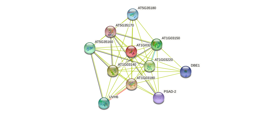 AT1G03250 protein (Arabidopsis thaliana) - STRING interaction network