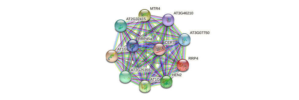 RRP4 protein (Arabidopsis thaliana) - STRING interaction network