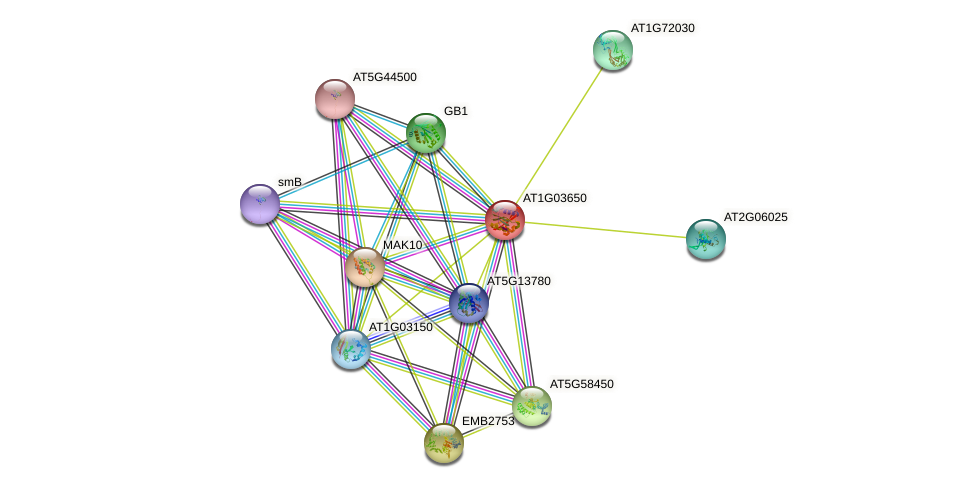 AT1G03650 protein (Arabidopsis thaliana) - STRING interaction network