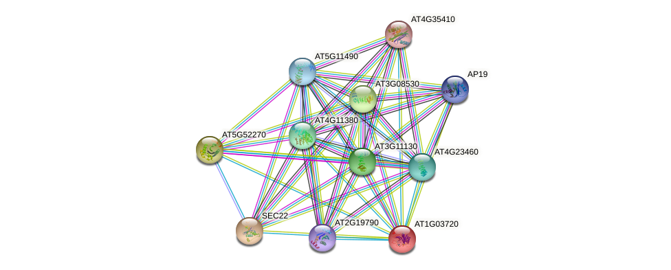 AT1G03720 protein (Arabidopsis thaliana) - STRING interaction network