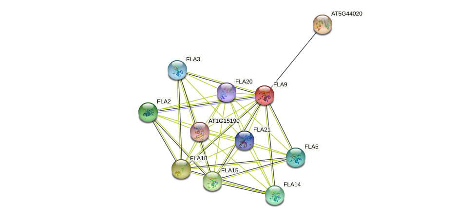 FLA9 protein (Arabidopsis thaliana) - STRING interaction network