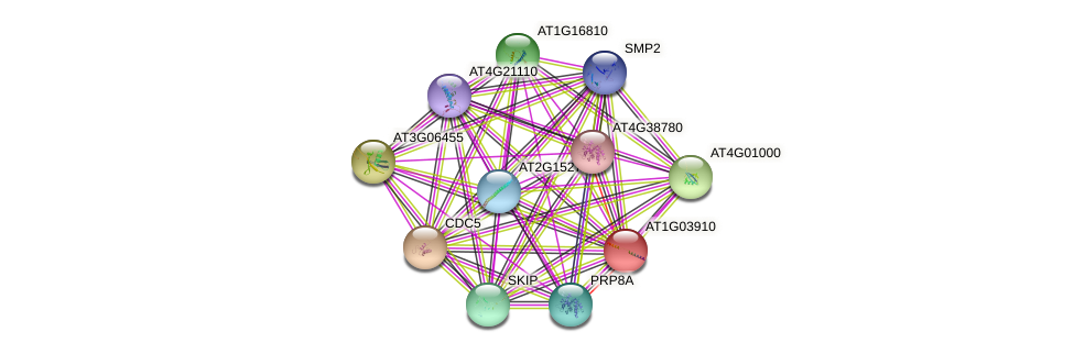 AT1G03910 protein (Arabidopsis thaliana) - STRING interaction network