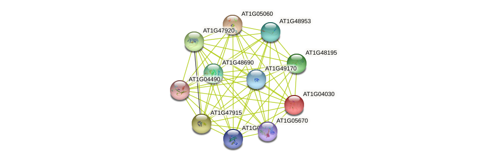 AT1G04030 protein (Arabidopsis thaliana) - STRING interaction network
