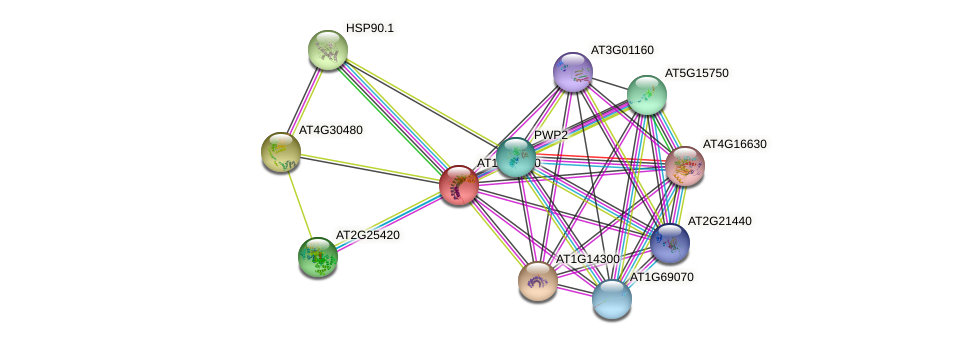 AT1G04130 protein (Arabidopsis thaliana) - STRING interaction network