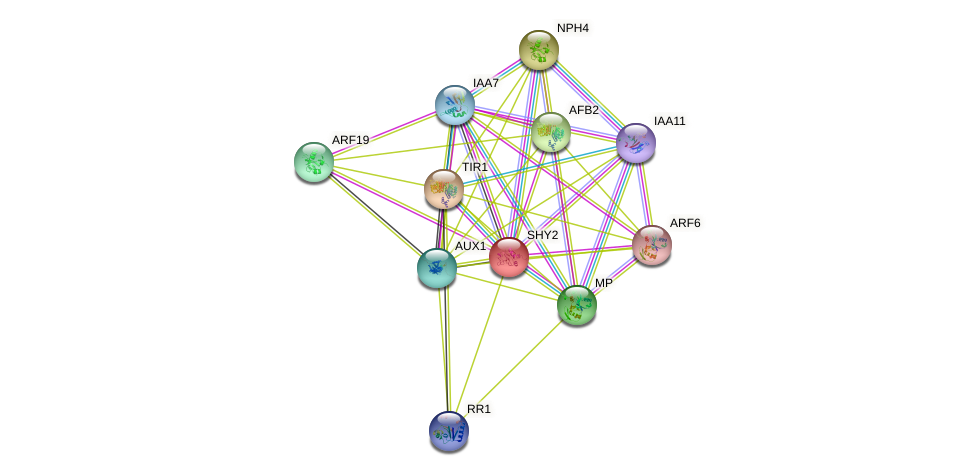 SHY2 protein (Arabidopsis thaliana) - STRING interaction network