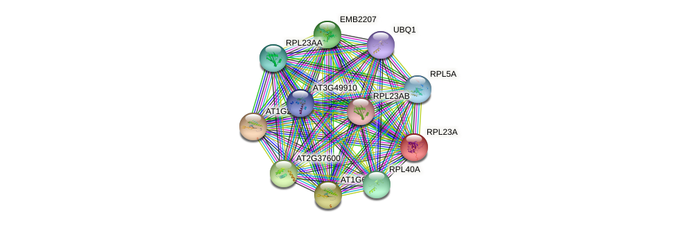 AT1G04480.1 protein (Arabidopsis thaliana) - STRING interaction network