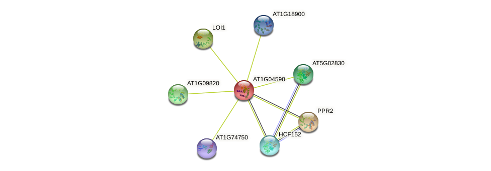 AT1G04590 protein (Arabidopsis thaliana) - STRING interaction network