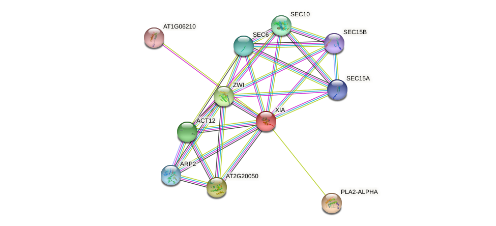 XIA protein (Arabidopsis thaliana) - STRING interaction network