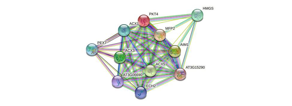 PKT4 protein (Arabidopsis thaliana) - STRING interaction network
