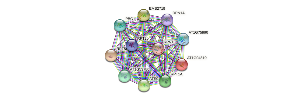 AT1G04810 protein (Arabidopsis thaliana) - STRING interaction network