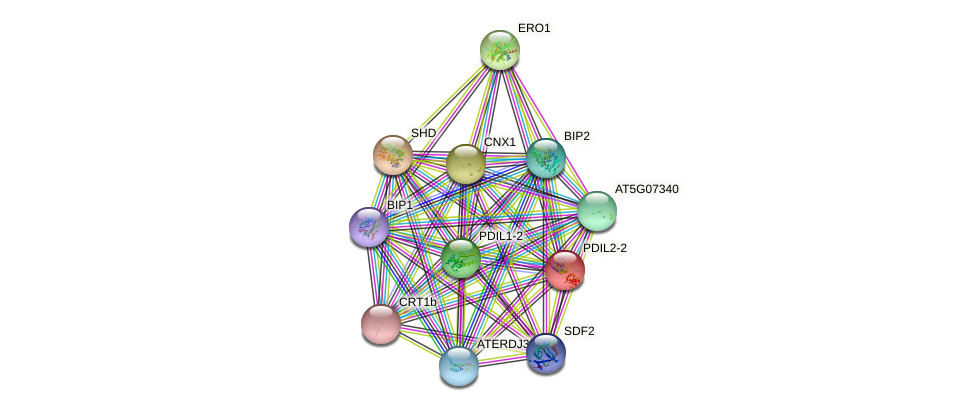 PDIL2-2 protein (Arabidopsis thaliana) - STRING interaction network