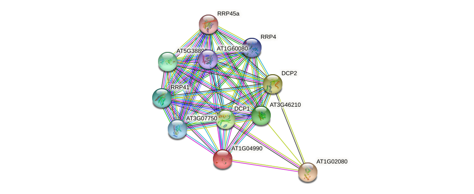 AT1G04990 protein (Arabidopsis thaliana) - STRING interaction network