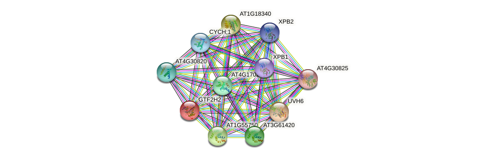 GTF2H2 protein (Arabidopsis thaliana) - STRING interaction network