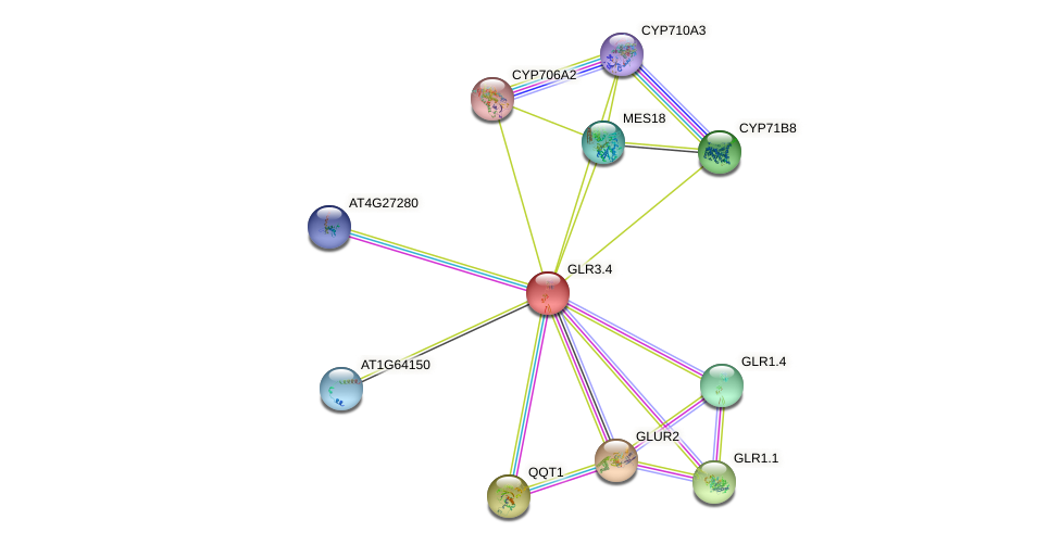 GLR3.4 protein (Arabidopsis thaliana) - STRING interaction network