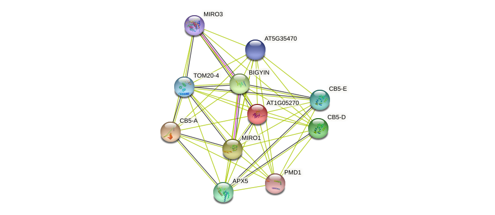 AT1G05270 protein (Arabidopsis thaliana) - STRING interaction network