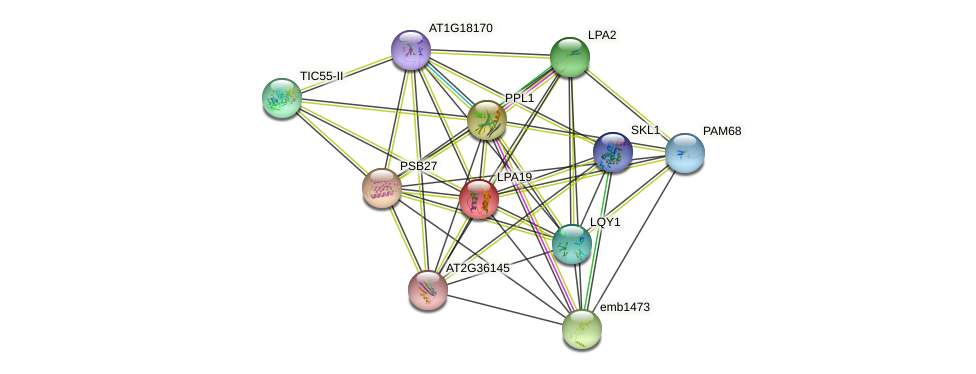 LPA19 protein (Arabidopsis thaliana) - STRING interaction network