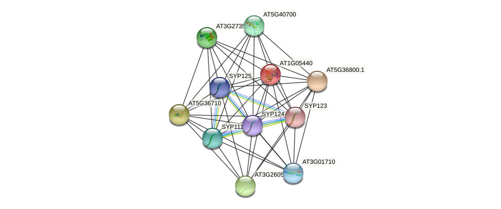 AT1G05440 protein (Arabidopsis thaliana) - STRING interaction network